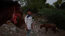 """I want to become a doctor when I grow up. I already know how to treat horses"" Sadik Khan is presently studying in the 9th standard at a state school in Noor Nagar."
